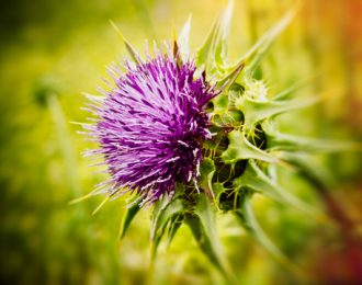 #9 Top Seller-Milk Thistle Pills- Liver Care, Lymphatic Sys. Cleanse,Cancer, Diabetes, Cholesterol